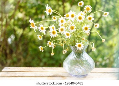 Camomile in vase on the table