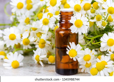 Camomile, white daisy oil