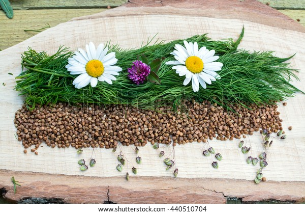 camomiles and clover and buckwheat on a wooden board from an oak
