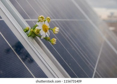 Camomille flowers growing through solar panel. Ecological friendly electricity generation. Solar panel.
