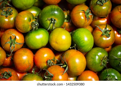 Camone Tomatoes, italy tomatoes, green tomatoes