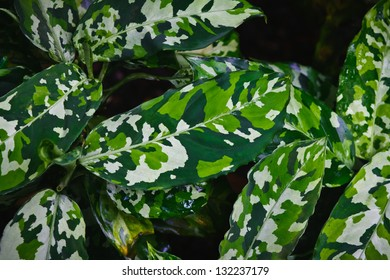 Camouflage foliage