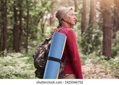 Camp, adventure, traveling, active recreation concept. Outdoor photo of eldery man with backpack and rug, wearing red sweater and cap, walking in forest among trees in wood, enjoys fresh air.