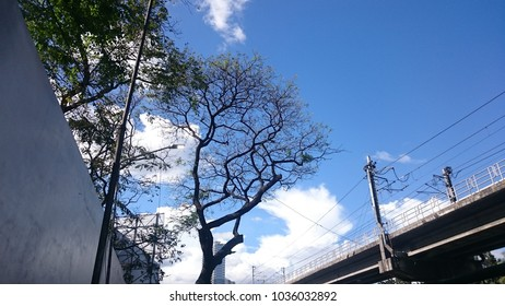 Camp Crame, Cubao, Quezon City Philippines - March 1, 2018, the trees and sky outside Camp Crame along EDSA, Quezon City Philippines