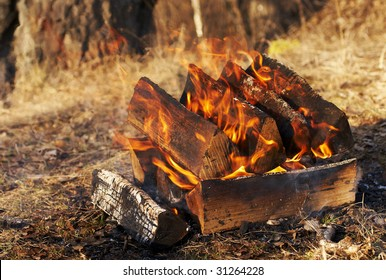 camp fire in the forest