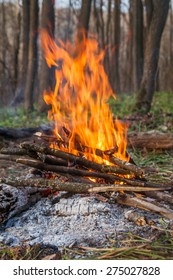 Camp fire in spring forest, touristic view, concept of travel and freedom