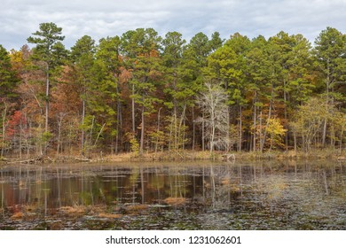 Camp Five Pond in the Irish Wilderness of the Mark Twain National Forest in Missouri.