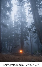 A camp forest in a misty forest