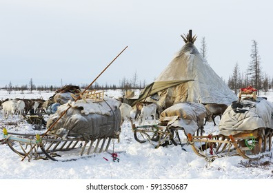 Camp of nomadic tribe in the polar tundra at a frosty day, chum, sled and other stuff. Yamal Peninsula, Siberia.