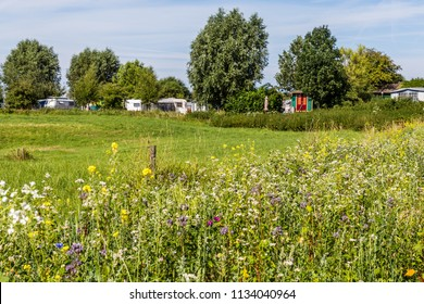 Camp site in the middle of nature with wild flowers in the foreground