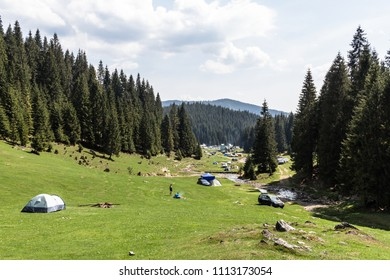 Camp in a valley between pine trees