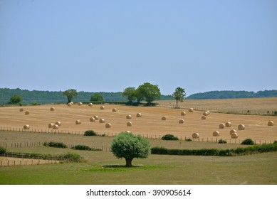 Campaign, France, wheat fields