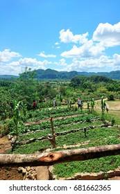 Campaign view Cuba