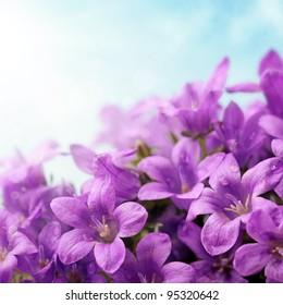 Campanula flowers and blue sky