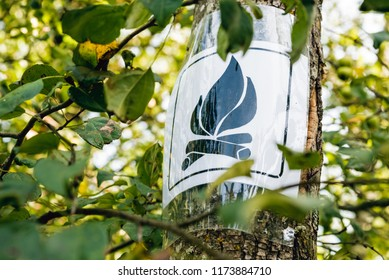Campfire sign on a tree in forest camp place.