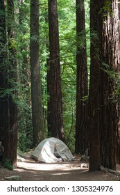 Campground at Big Basin Redwoods State Park