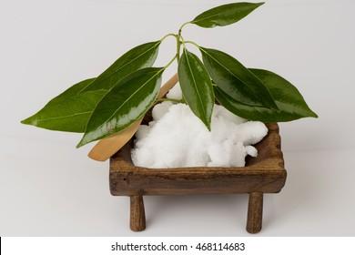 Camphor, Gum Camphor, Formosan Camphor, Laurel Camphor (Cinnamomum camphora (L.) J.Presl) tree