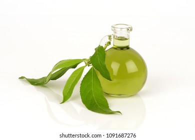 Camphor Tree green leaves and oil have property medicine.