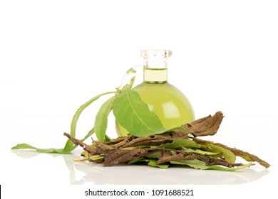 Camphor Tree green,dried leaves and oil have property medicine.