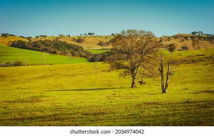 Campina da Lagoa, Parana, Brazil - August 19 2021 - Country Landscape near Campina da Lagoa and Roncador.