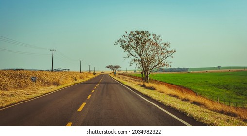 Campina da Lagoa, Parana, Brazil - August 19 2021 - Country Road near Campina da Lagoa and Roncador.