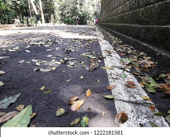CAMPINAS, BRAZIL - OCTOBER 20, 2018: The Jequitibás Forest, created in the 1880s, is a park located in the Central Region of the city of Campinas, being one of the largest and oldest leisure areas.