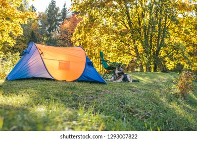 Camping with dog, small tent and chair in autumn coloured lush nature in Vilnius, Lithuania