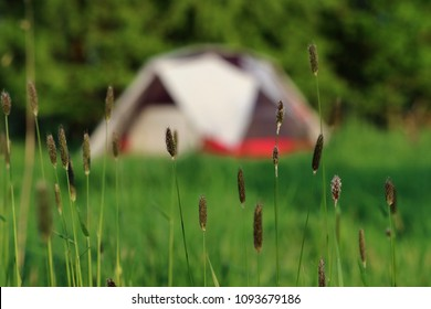 Camping with dome tent and trees soft focus in background and sharp focus grass flowers in foreground.