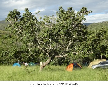 camping in the florest