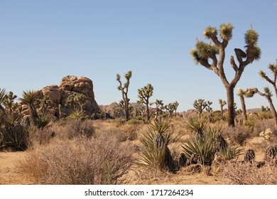 camping in the Joshuatree national park