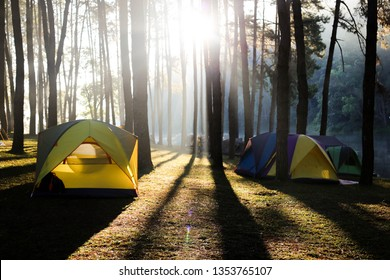 Camping in the middle of a pine forest