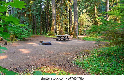 Camping Spot - A wooded campsite at Camp Creek Campground - near Rhododendron, OR