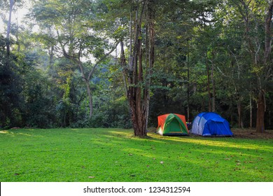 Camping tents in the morning on forest