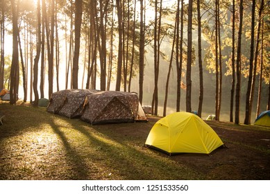 Camping and yellow tent under the pine forest  At Pang Ung, Thailand