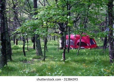 a campsite set up in the woods