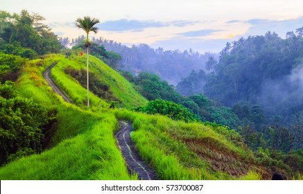Campuhan Ridge Walk , Scenic Green Valley in Ubud Bali