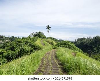 Campuhan Ridge Walk in Ubud, Bali, Indonesia