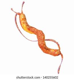 Campylobacter Baceteria