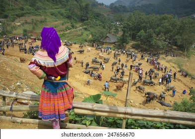 CAN CAU, VIETNAM - OCTOBER 24: Unidentified woman of the Flower H'mong People at the water buffalo market on October 24, 2014 in Can Cau, Vietnam. H'Mong are the 8th largest ethnic group in Vietnam