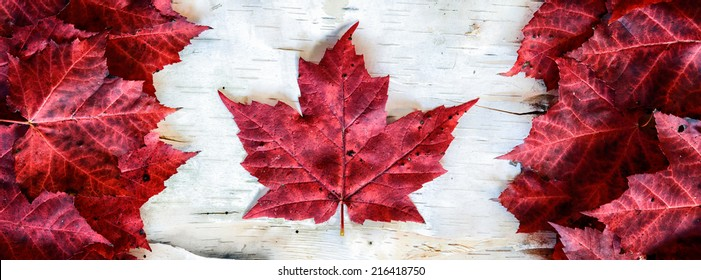 A Canada flag made from real red maple leafs on a birch bark background in a banner orientation.  Designed to scale to fit Facebook banner dimensions.