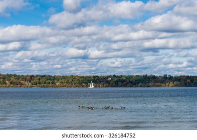Canada geese and sailboat  on Kempenfelt Bay in Barrie