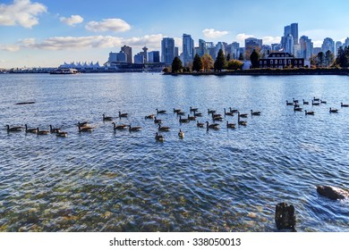 Canada geese in the sea water with cityscape in the background