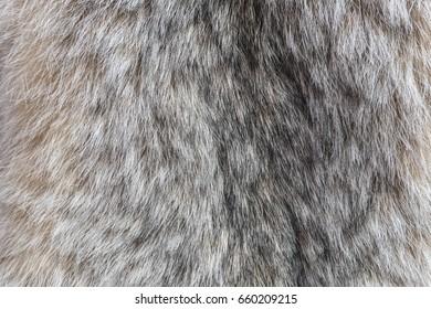 Canada Lynx fur. Fur of lynx close up texture.