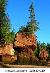 Canada, Province of New Brunswick, Bay of Fundy, Hopewell Rock Park, Fundy Biosphere Reserve