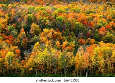 Canada Red Yellow Forest
