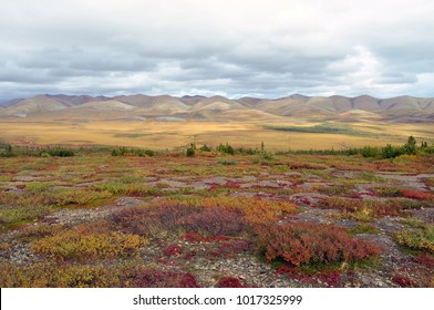 Canadian Arctic Circle, Yukon/NWT border/Canada- August 25, 2012: Arctic tundra with pink, purple and orange shrubs photographed during the day.