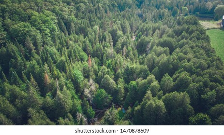 Canadian Forest near Collingwood, Ontarion with Maple Trees. Aerial shot.