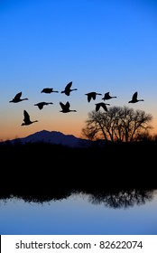 Canadian geese flying over riparian, pool, bare Winter trees, mountain peak, evening blue.