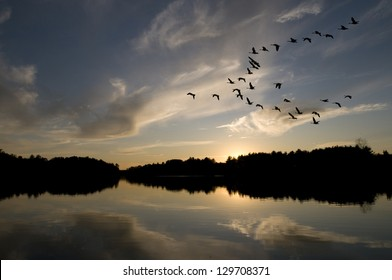 Canadian geese in formation fly over the northern lake