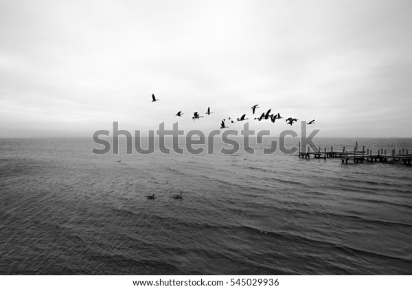 Canadian geese formation in outer banks